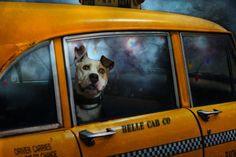 Bronx-taxi.jpg