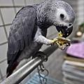 哈比好喜歡吃沙田橘!