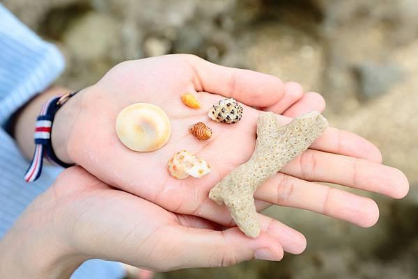 超美的貝殼~