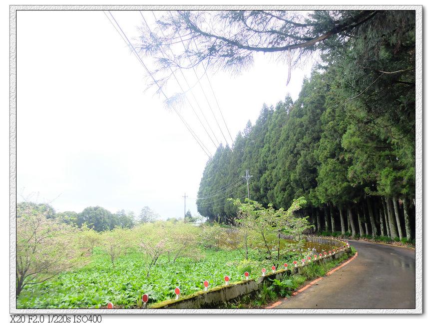 外面的櫻花林花季已過