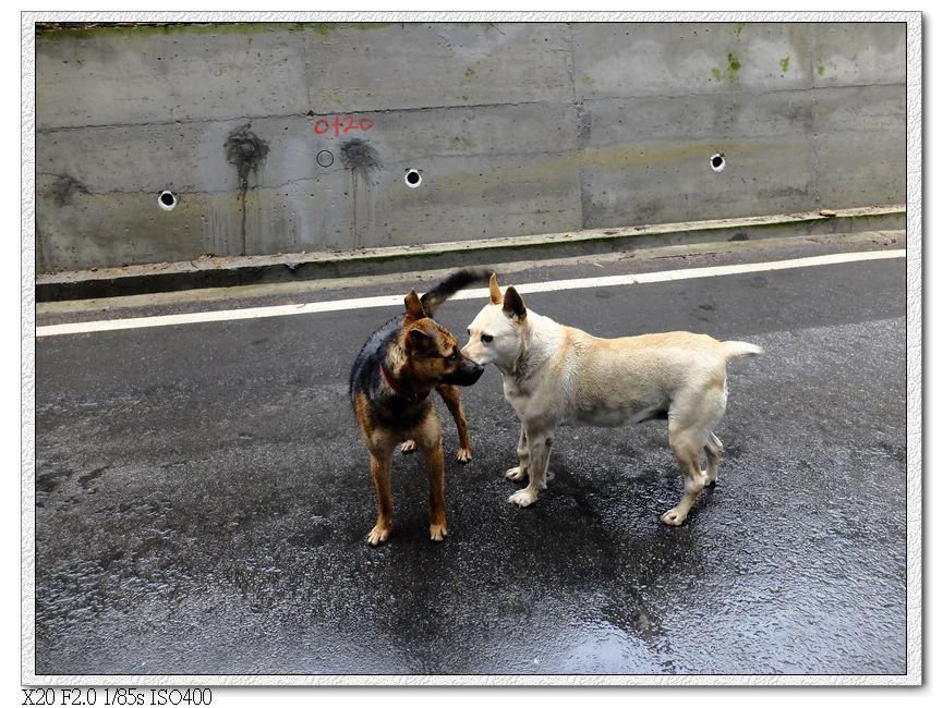 小黃跟小白是好朋友,在這停下腳步了