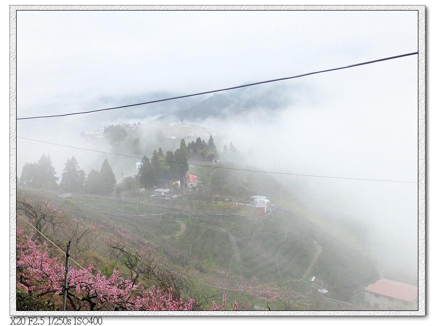 霧中桃花園