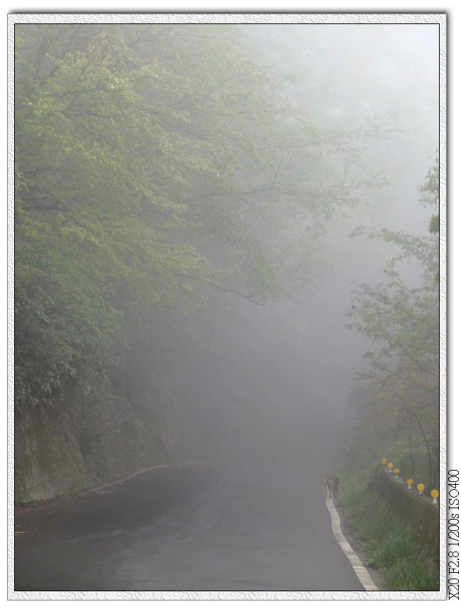 濃霧中只有小黃跟我一起走