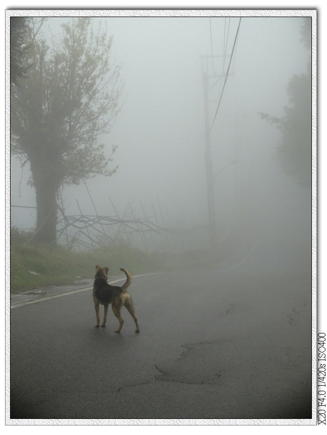 濃霧中跟著小黃的腳步