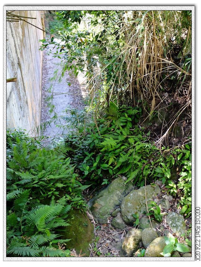 乾透的小溪