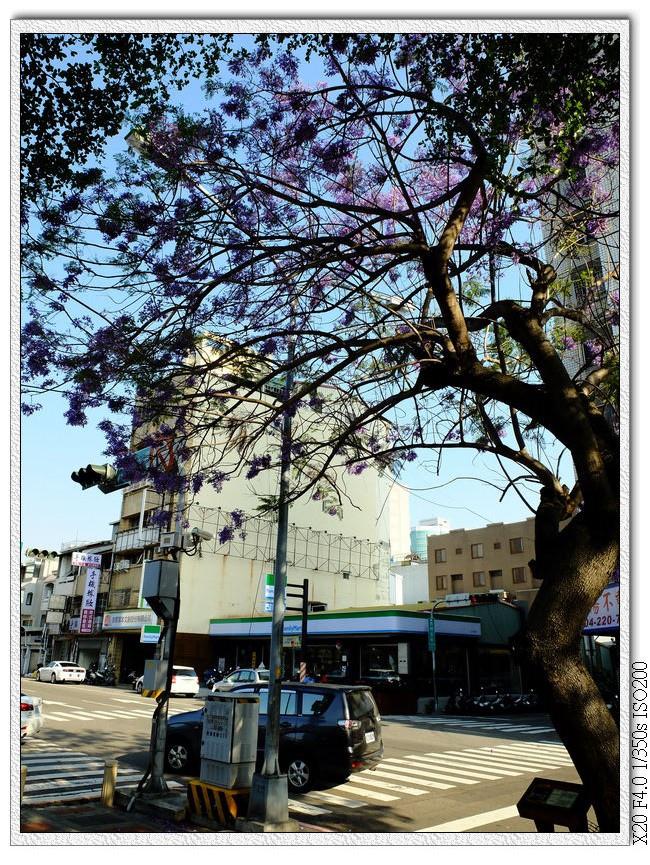 藍花楹-太原路太原二街口
