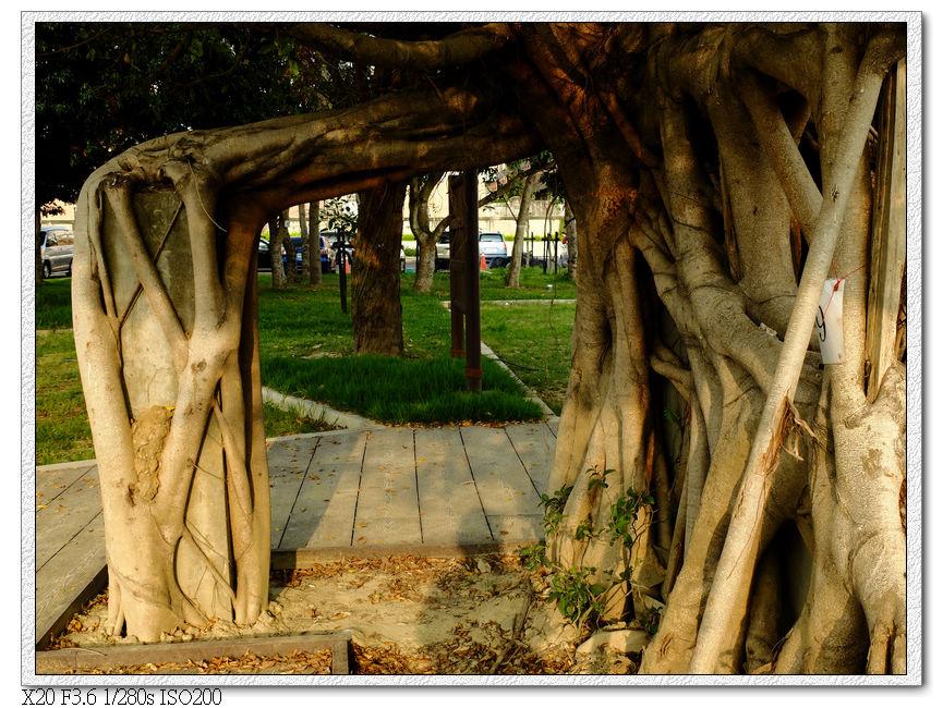 長在廢棄建築上的樹