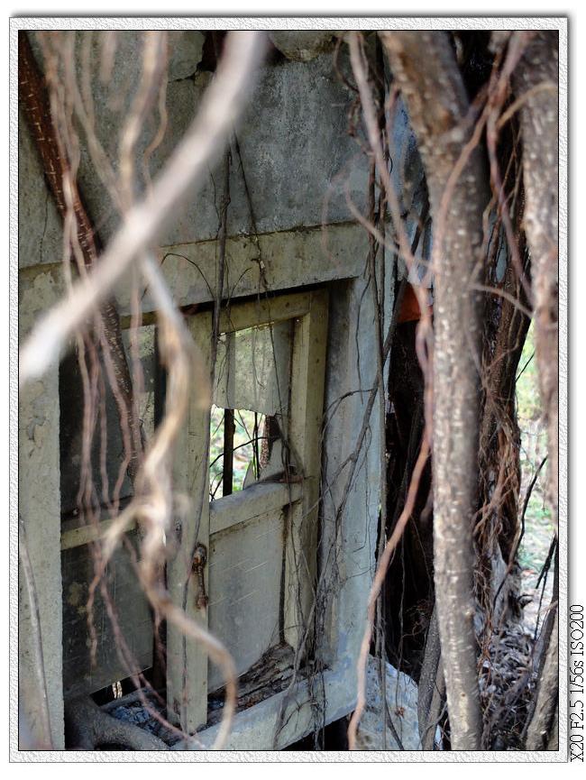 樹根下的廢棄建築