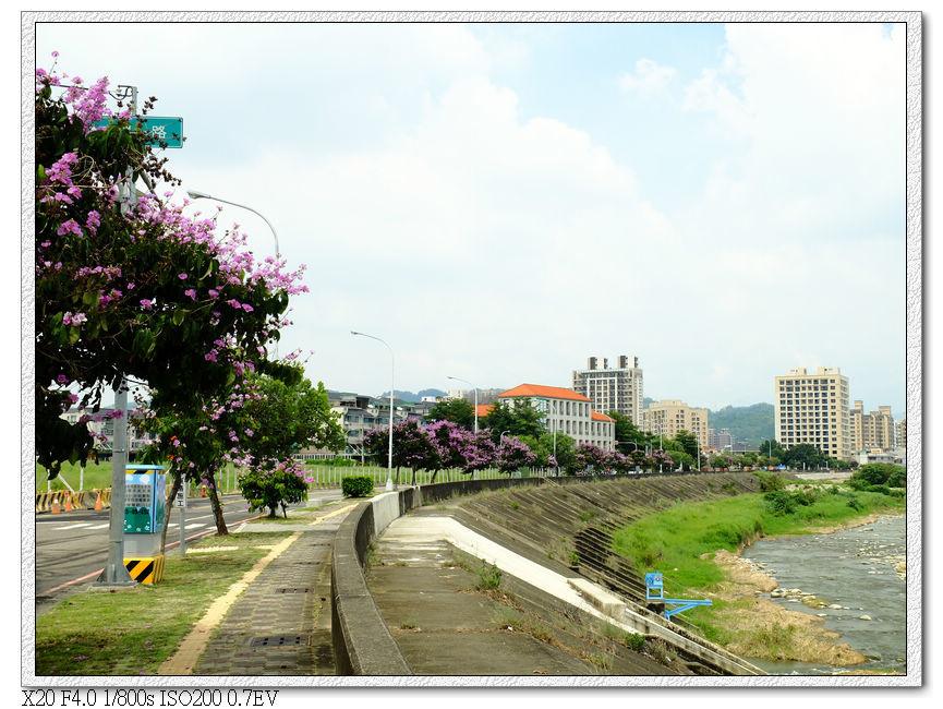旱溪西路三段-大花紫薇