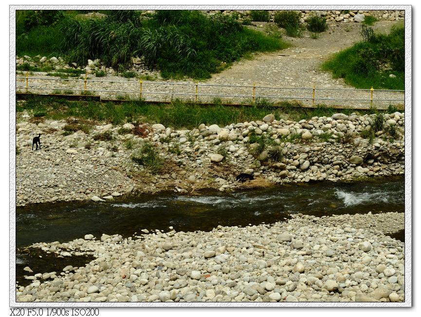 旱溪西路三段-小黑們也要玩水