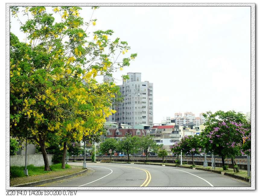 旱溪東路三段-阿勃勒,大花紫薇