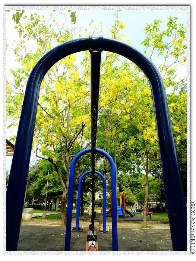 北屯兒童公園-阿勃勒