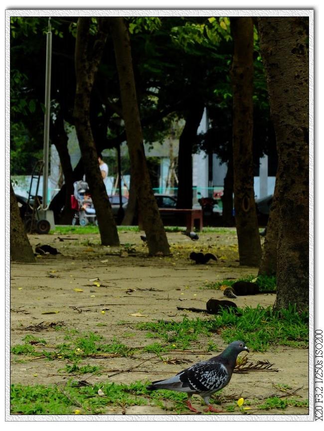 北屯兒童公園-鴿子跟松鼠