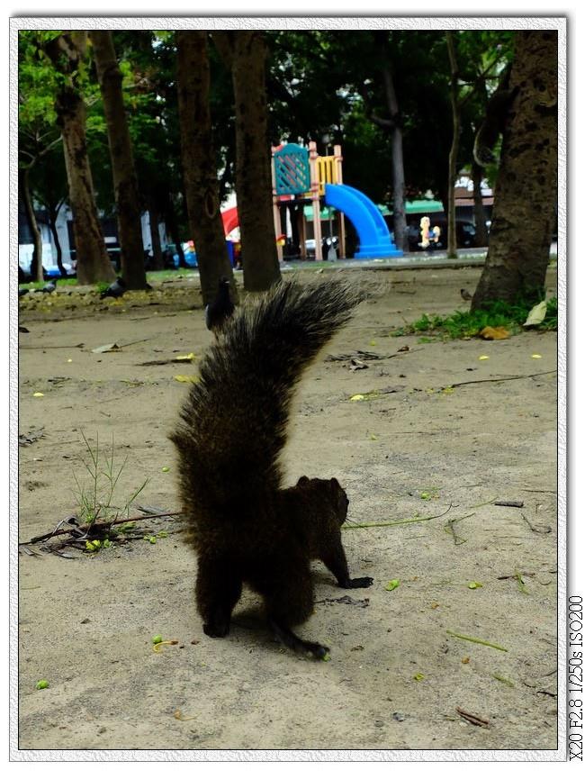 北屯兒童公園-松鼠