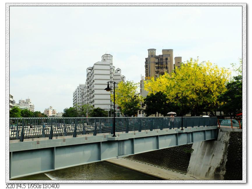華美公園-阿勃勒