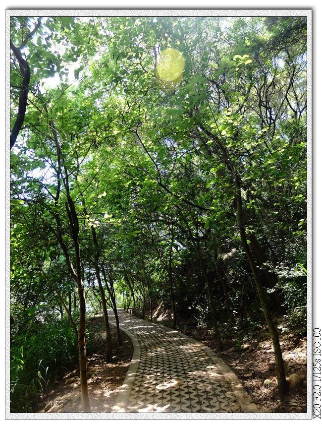 選擇走左邊平緩鋪面步道