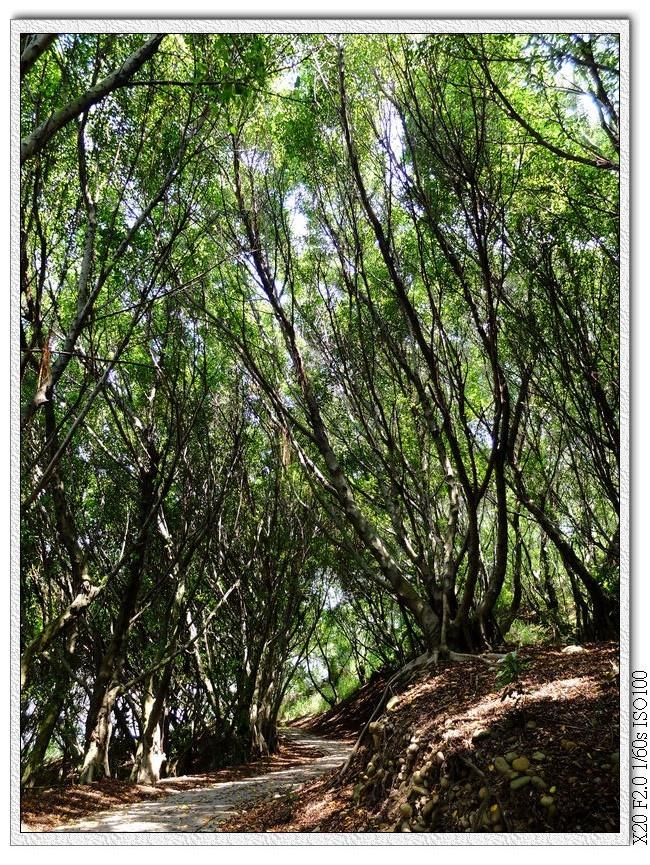 樹林中的步道