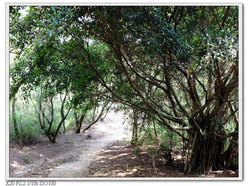 大樹下的步道