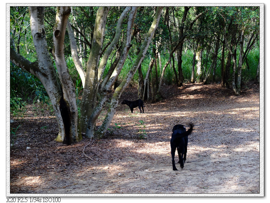 一個人帶兩隻小黑跑過去了