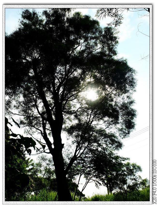 出口前的大樹