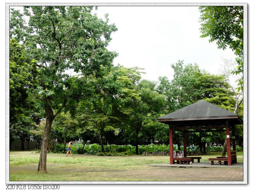景賢公園的荷花池,過東山國中就看到了