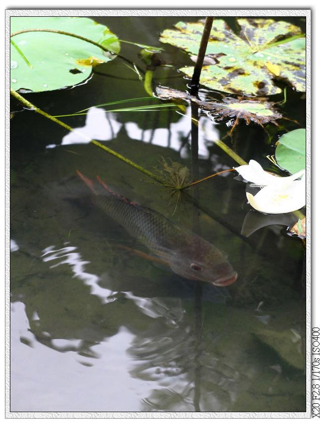 這池裡有魚有烏龜,還有很多神秘的東西