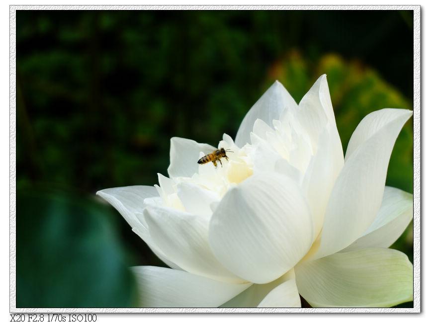 早上的小蜜蜂
