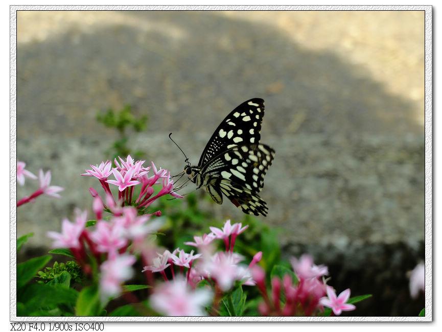 路上很多蝴蝶