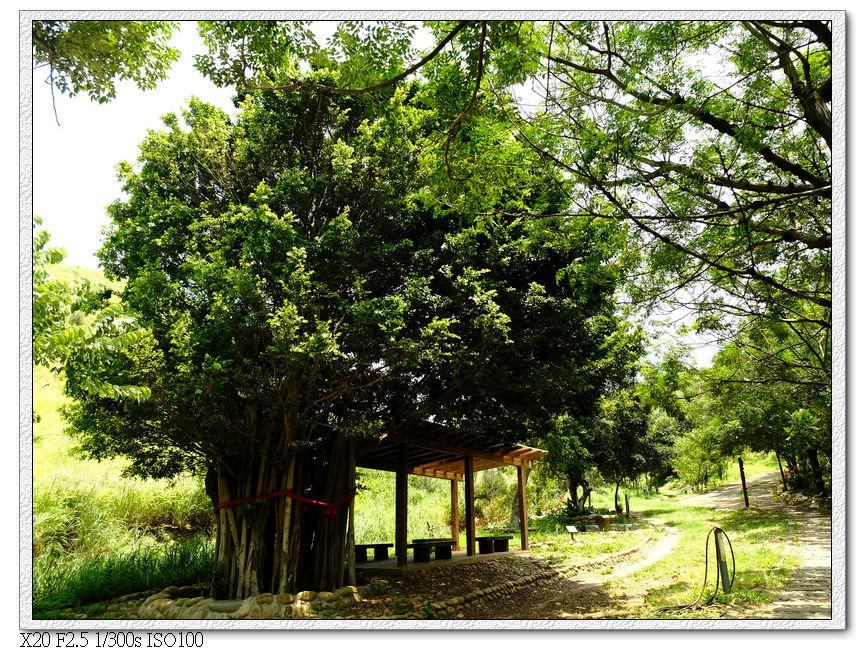 大樹下休息區