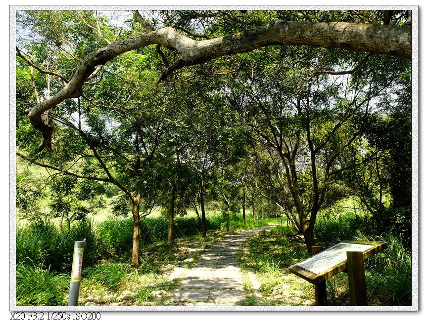 13:23 五福相思樹休息區,終於有樹蔭了