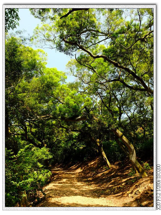 土坡+樹蔭,很舒服的步道
