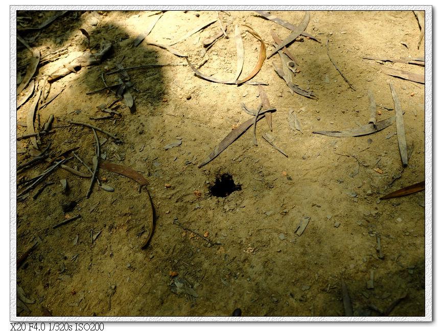 地上好像可以灌蟋蟀