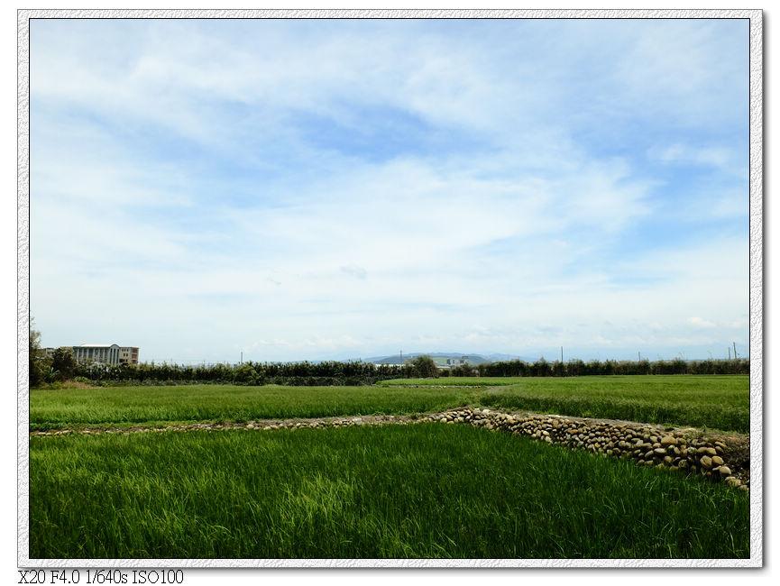 大安田地,後面土丘是鐵砧山吧