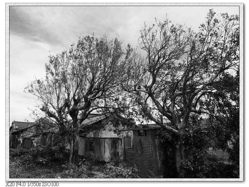 老屋根枯樹