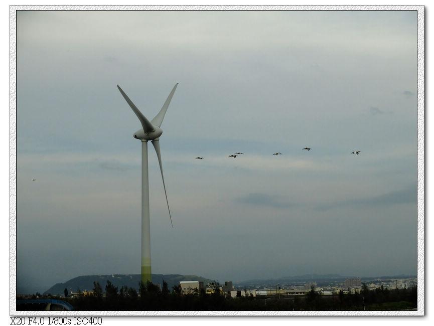 一大群海鳥飛過