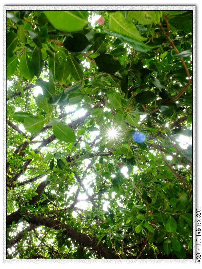 台中文學館樹木