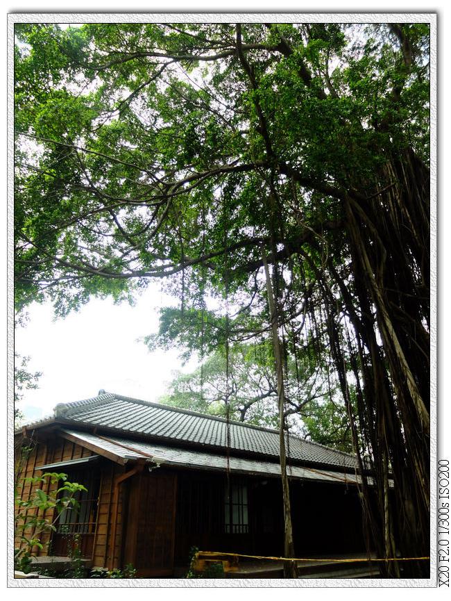 台中文學館老屋老樹