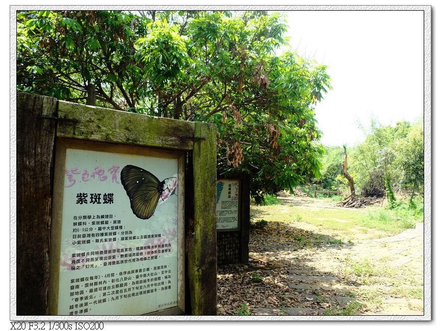 瑞井社區-紫斑蝶的遷徙路線