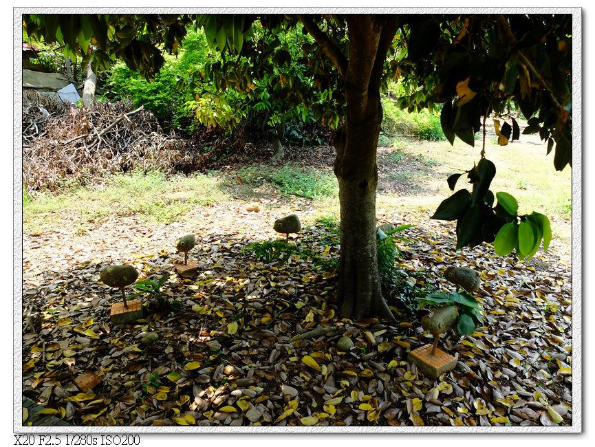 瑞井社區-樹下裝飾