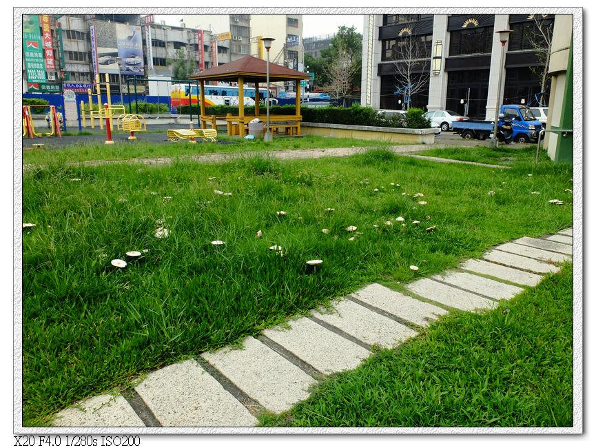 水安公園香菇園