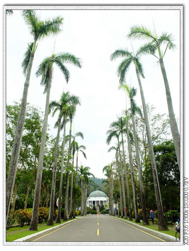 早期台灣官方建築一定會有的椰林道