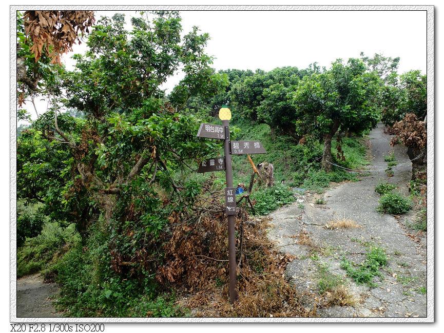 12:25 來來回回好幾次,終於找到往三角點的路,從右上果園進去