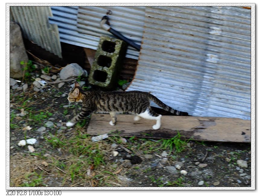 附近的小貓