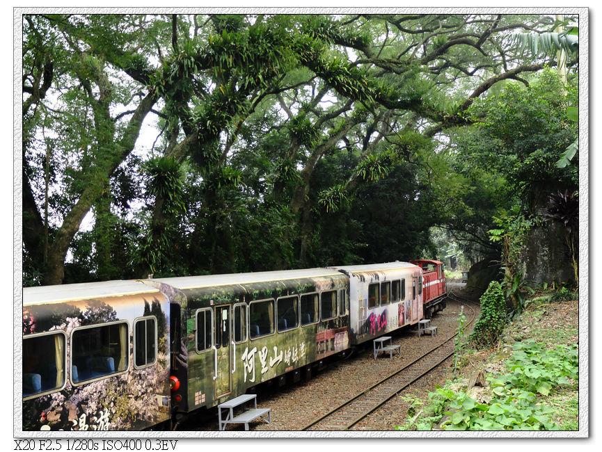 樟腦林間的火車