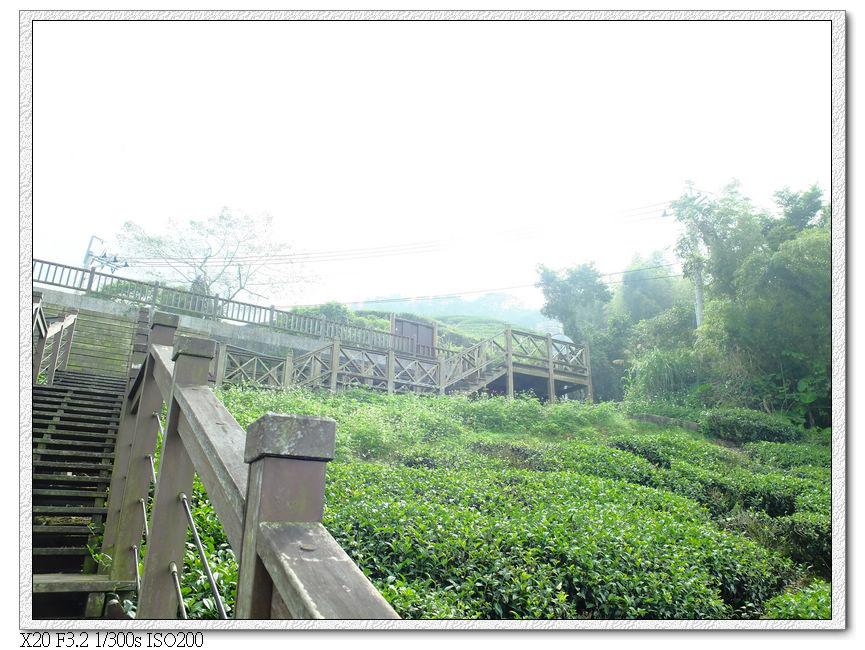 太興步道茶園觀景台