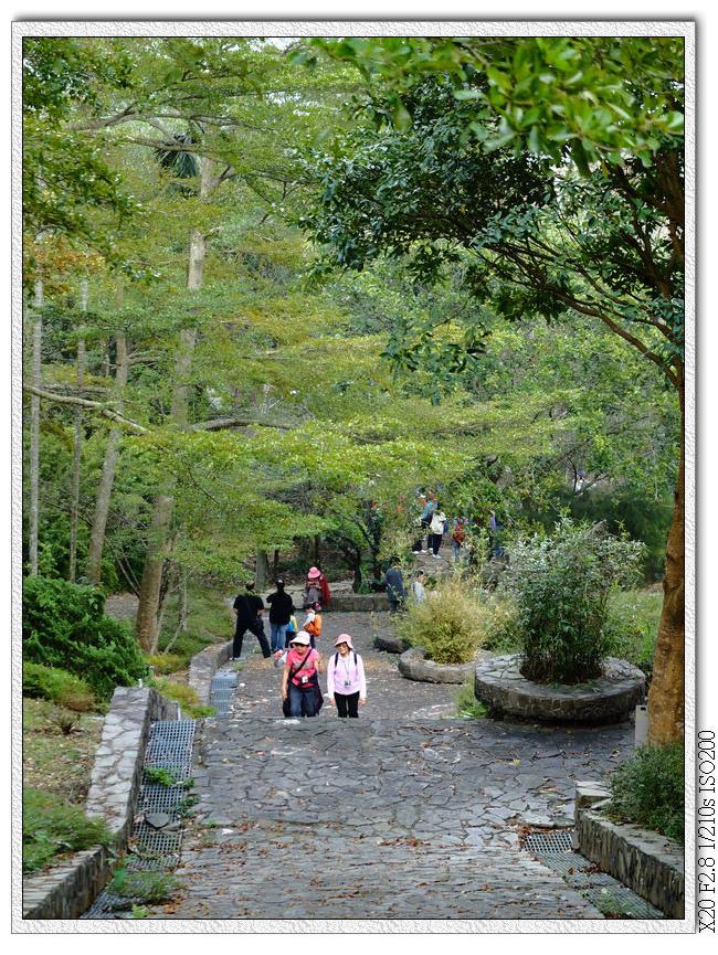 回到泰興巖,導覽員正介紹後花園植物