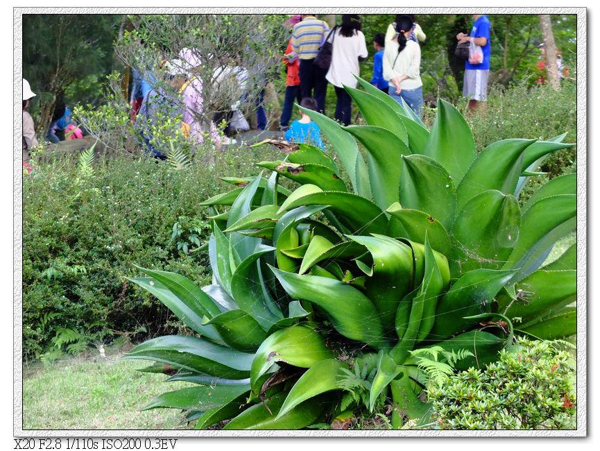 泰興巖後花園
