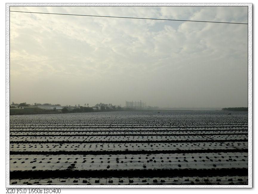 屏東的農作物