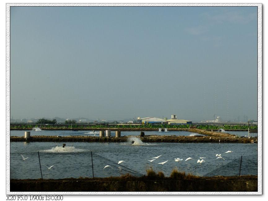 鎮安站附近的養殖魚塭