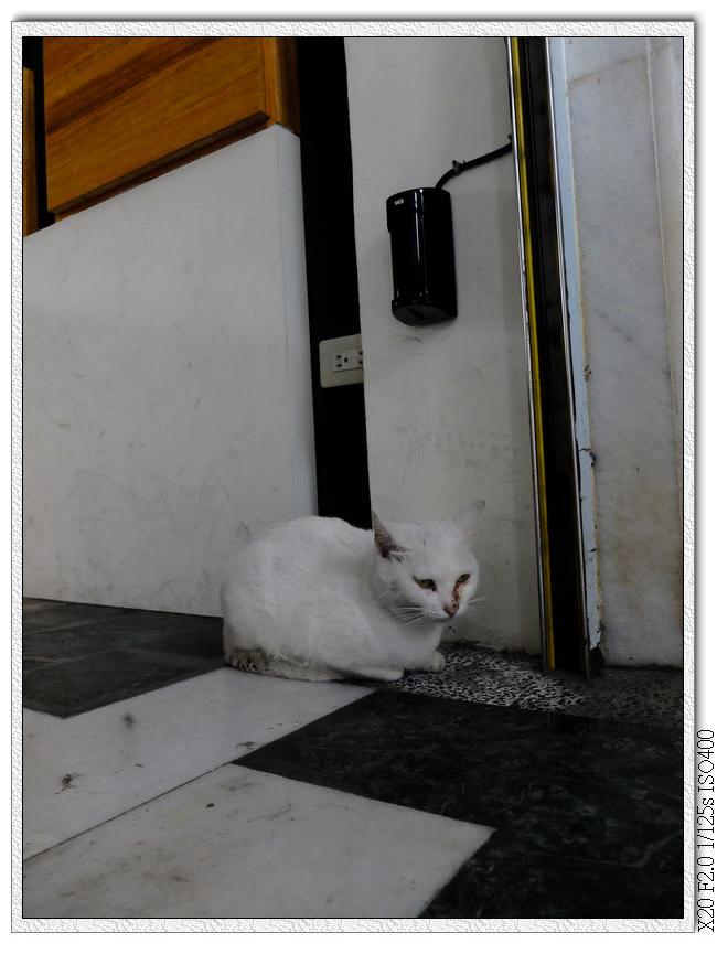 遊客服務中心的小貓